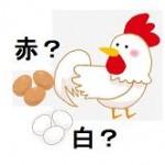 鶏の卵 赤玉と白玉のちがい 栄養価はどっちが高い?