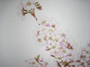 ボタニカルアート-桜