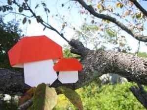 桜の木に生えたきのこ