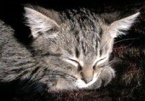 不眠症に効果的マインドガード