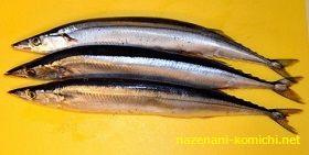 DHA豊富な青魚は目を守る食べ物